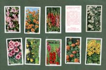 Collectible  Cigarette card set Garden Flowers 1938 by Gallaher